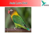burung-love-bird