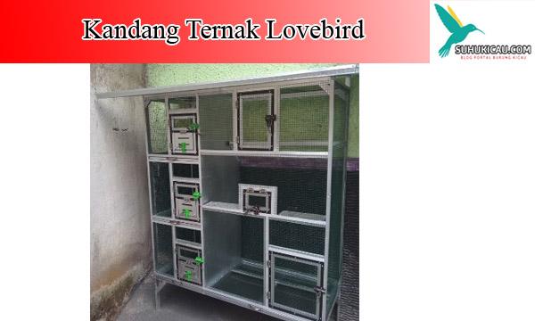 kandang-ternak-lovebird