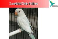 lovebird-pale-fallow