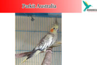 parkit-australia