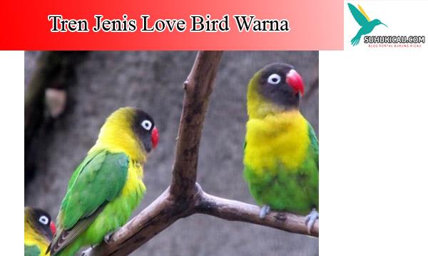 lovebird-warna