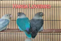 harga-lovebird