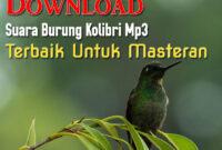 suara-burung-kolibri