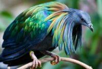 burung-unik