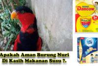 makanan-burung-nuri