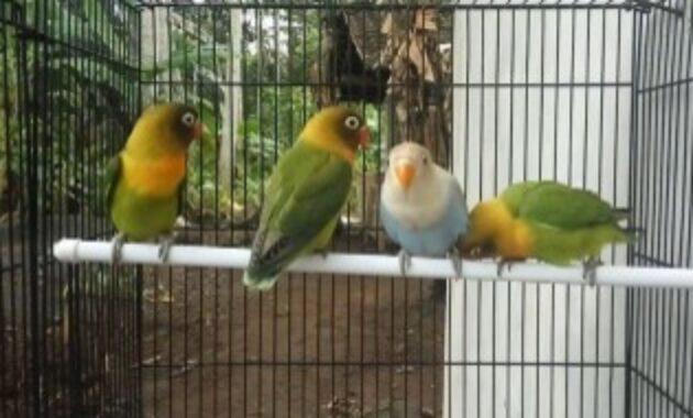 lovebird-paud-prospek